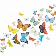 Butterflies-Wall-Stickers-Decals-Art-art-graphics-vinyl-mural-decoration-263123945483-2