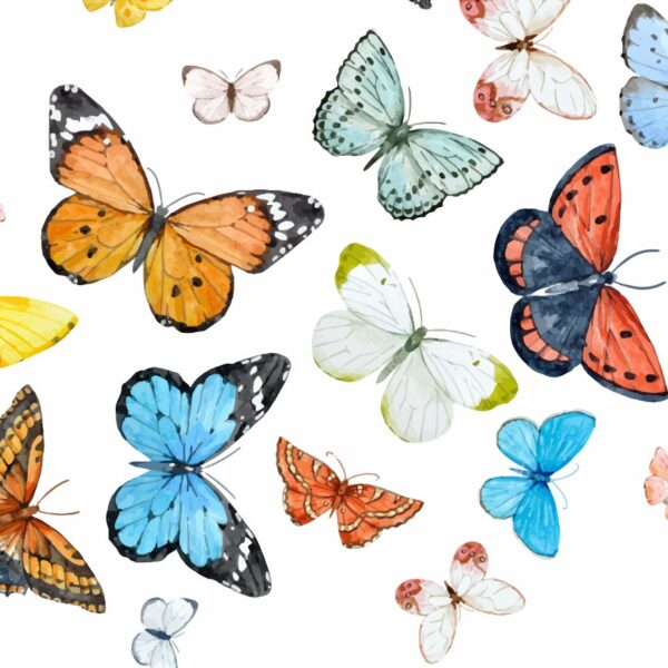 Butterflies-Wall-Stickers-Decals-Art-art-graphics-vinyl-mural-decoration-263123945483